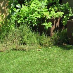 דשא סינטטי מחיר אטרקטיבי