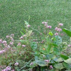 דשא סינטטי במחיר הוגן לכל כיס